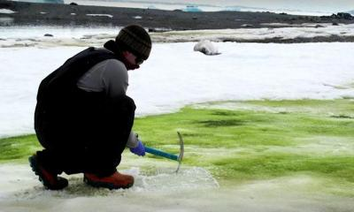 Climate change turning Antarctica‍‍`s snow green