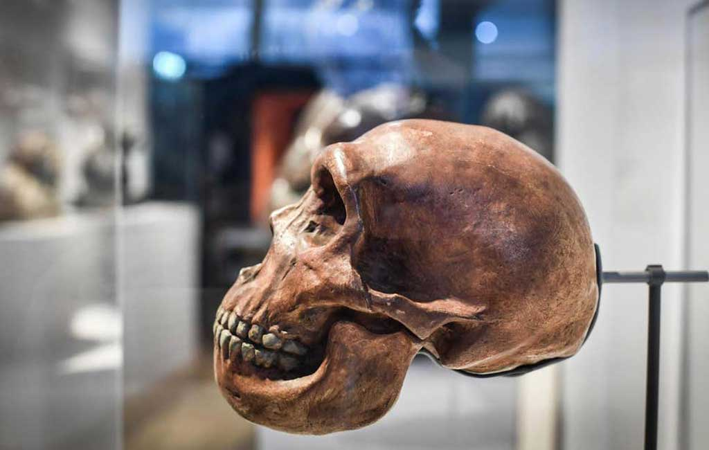 'Mysterious' ancient human genome detected in DNA